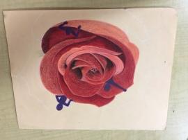 Shaelyn- Untitiled(flower)